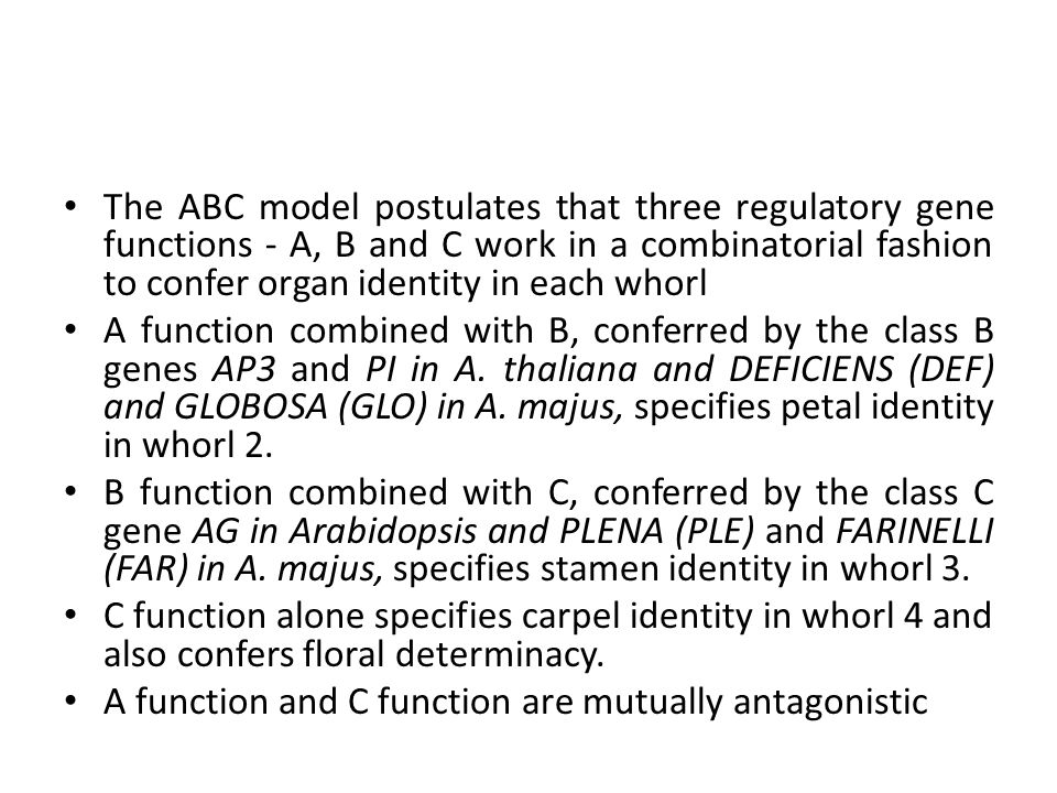 The ABC model postulates that three regulatory gene functions - A, B and C work in a combinatorial fashion to confer organ identity in each whorl A function combined with B, conferred by the class B genes AP3 and PI in A.