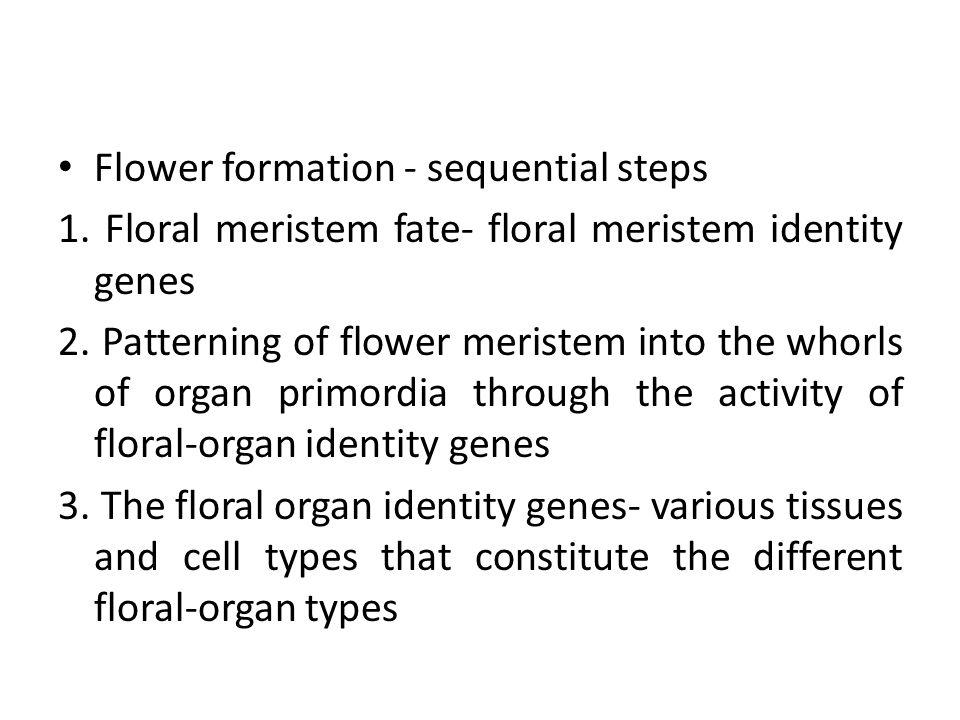 Flower formation - sequential steps 1. Floral meristem fate- floral meristem identity genes 2. Patterning of flower meristem into the whorls of organ