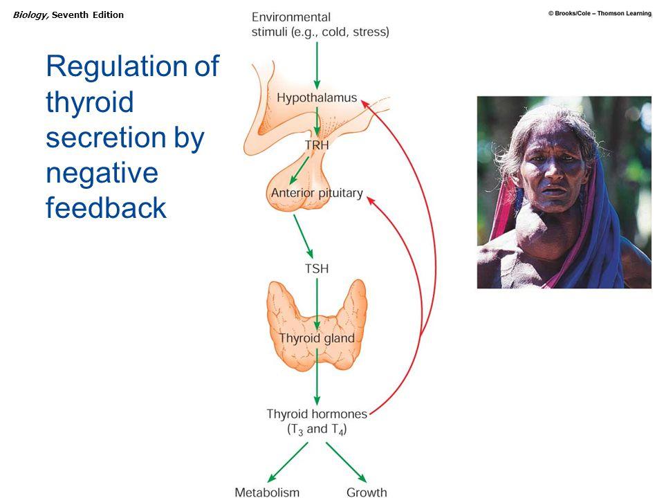 Copyright © 2005 Brooks/Cole — Thomson Learning Biology, Seventh EditionCHAPTER 47 Endocrine Regulation Regulation of thyroid secretion by negative fe