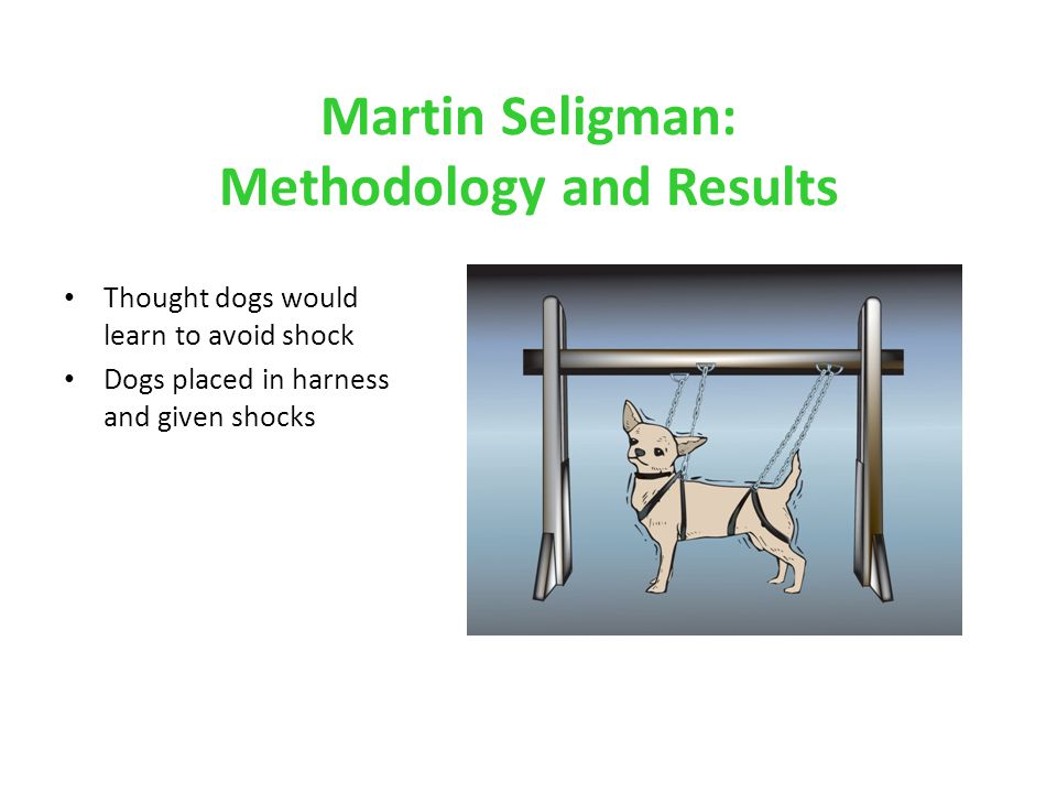 Martin Seligman: Methodology and Results Thought dogs would learn to avoid shock Dogs placed in harness and given shocks