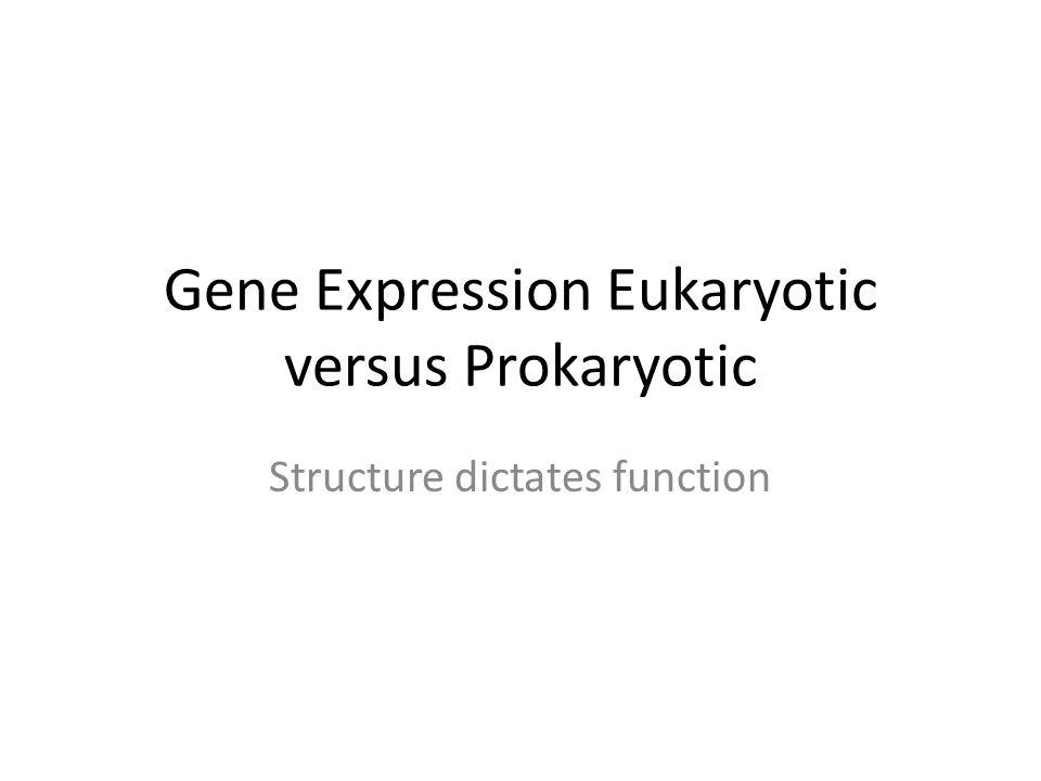 Gene Expression Eukaryotic versus Prokaryotic Structure dictates function