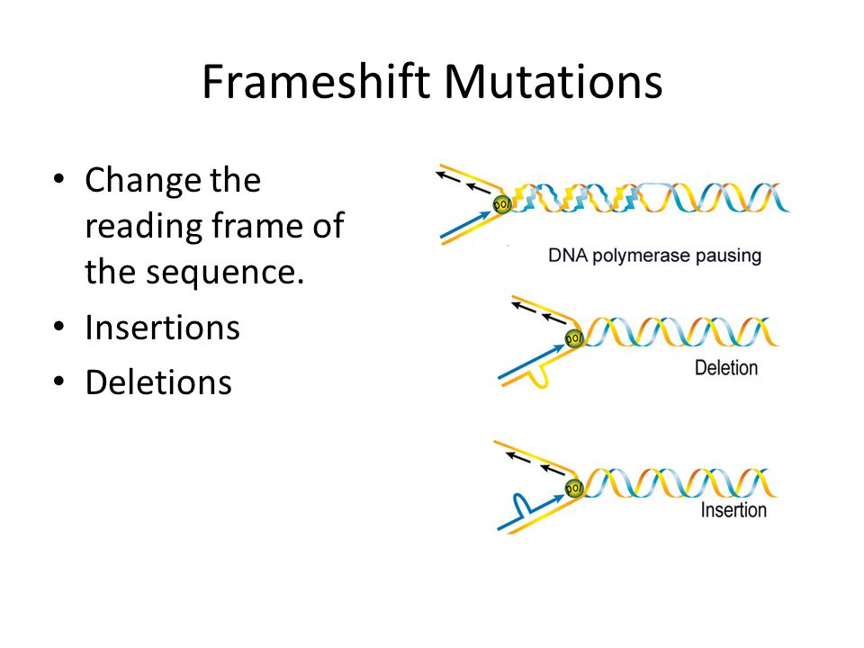 Frameshift Mutations Change the reading frame of the sequence. Insertions Deletions
