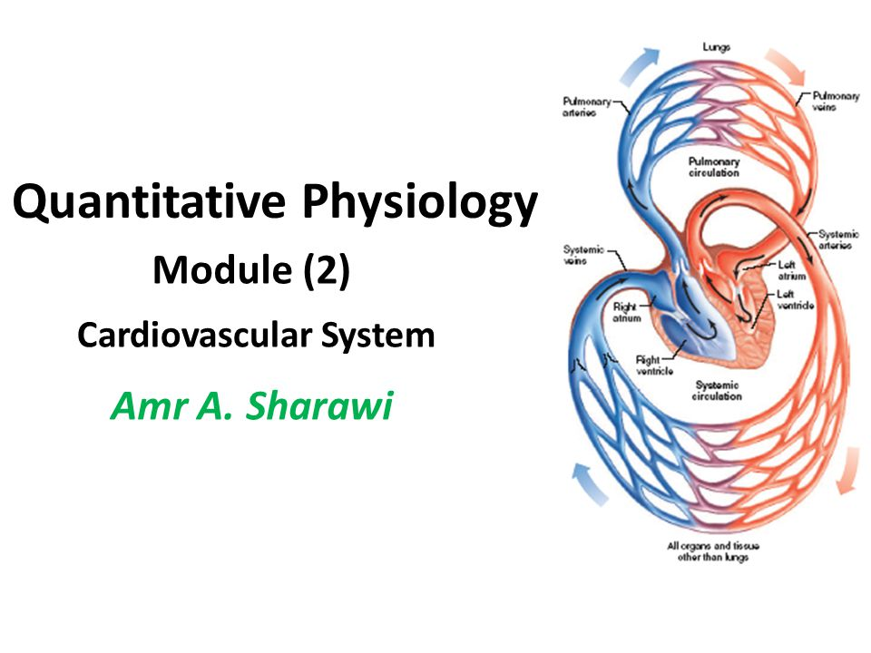 Cardiovascular Control Because of the body's quest for homeostasis and stability, virtually nothing is left to chance, and every biochemical end can be arrived at through a number of alternative means.