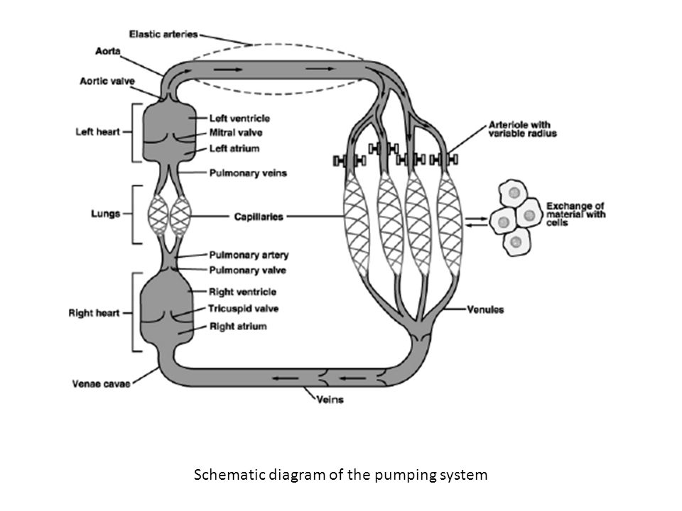 Schematic diagram of the pumping system