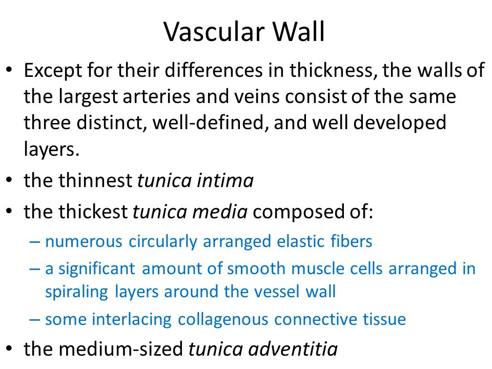 Vascular Wall Except for their differences in thickness, the walls of the largest arteries and veins consist of the same three distinct, well-defined,
