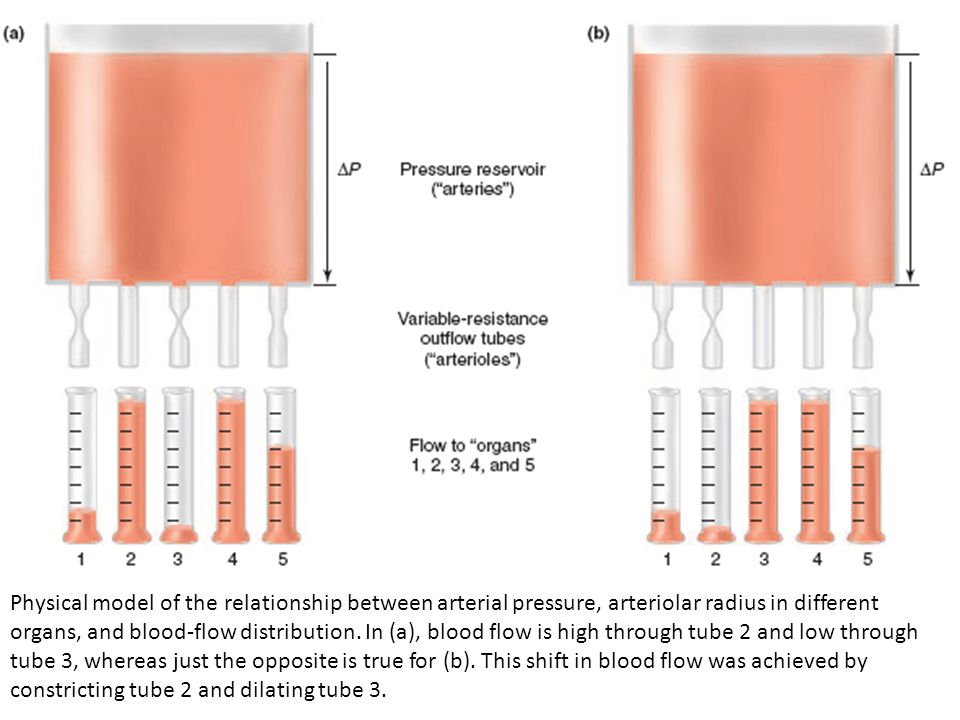 Physical model of the relationship between arterial pressure, arteriolar radius in different organs, and blood-flow distribution. In (a), blood flow i