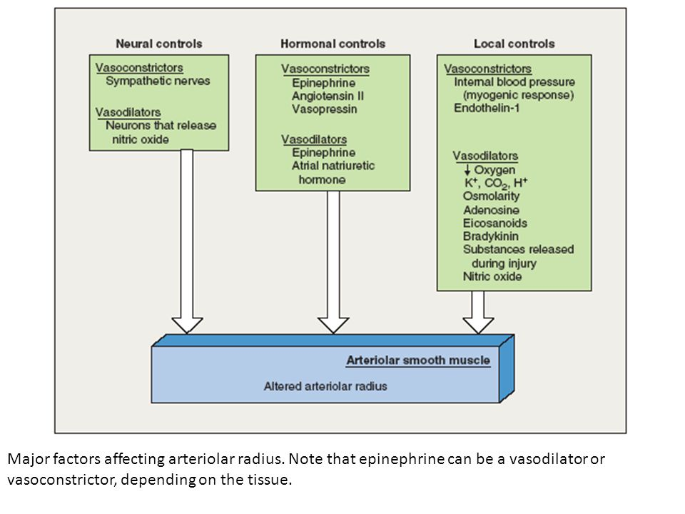 Major factors affecting arteriolar radius. Note that epinephrine can be a vasodilator or vasoconstrictor, depending on the tissue.