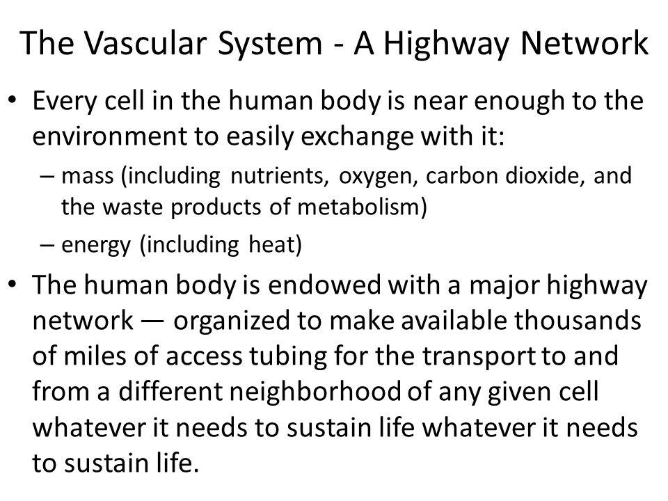 Cardiac sympathetic and parasympathetic nerves.