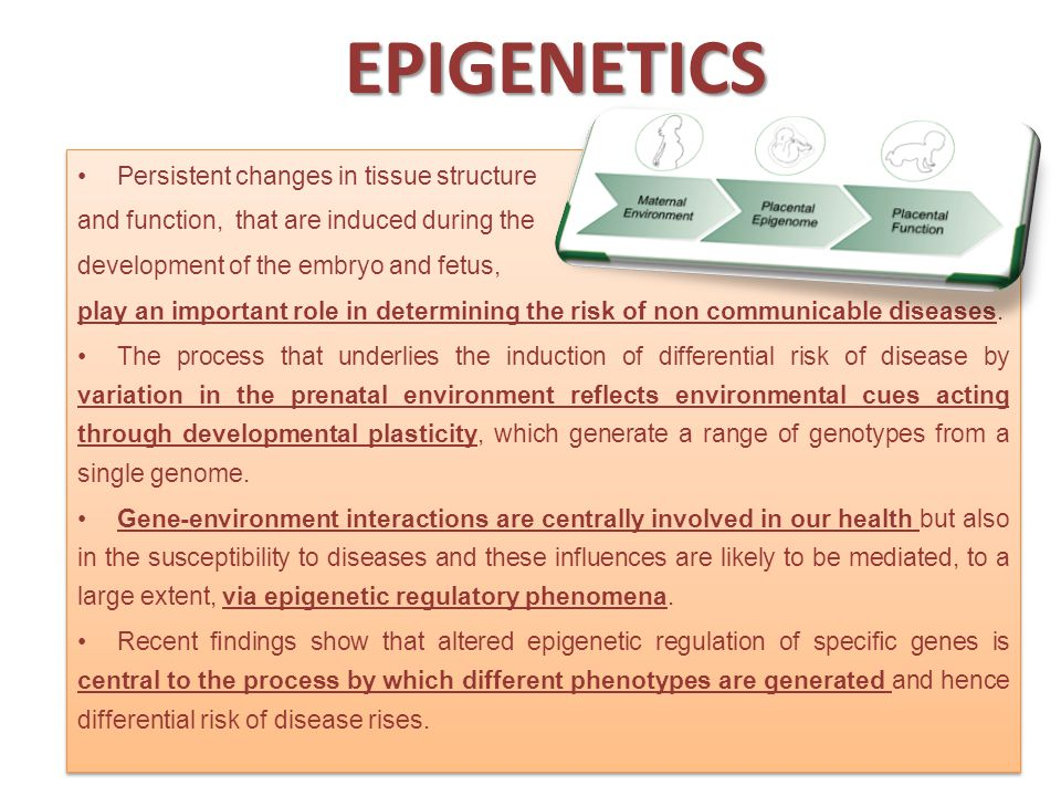 EPIGENETICS Persistent changes in tissue structure and function, that are induced during the development of the embryo and fetus, play an important role in determining the risk of non communicable diseases.