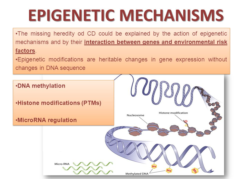 DNA METHYLATION DNA methylation has been implicated in the control of several cellular processes including differentiation, gene regulation, development, genomic imprinting and X-chromosome inactivation.