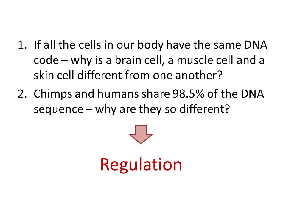 Regulation 1.If all the cells in our body have the same DNA code – why is a brain cell, a muscle cell and a skin cell different from one another.