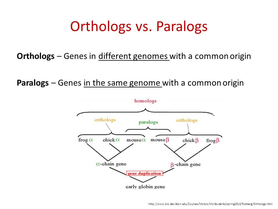Orthologs vs. Paralogs Orthologs – Genes in different genomes with a common origin Paralogs – Genes in the same genome with a common origin http://www