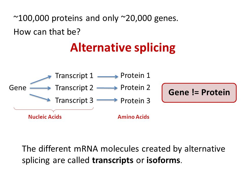 ~100,000 proteins and only ~20,000 genes. How can that be.
