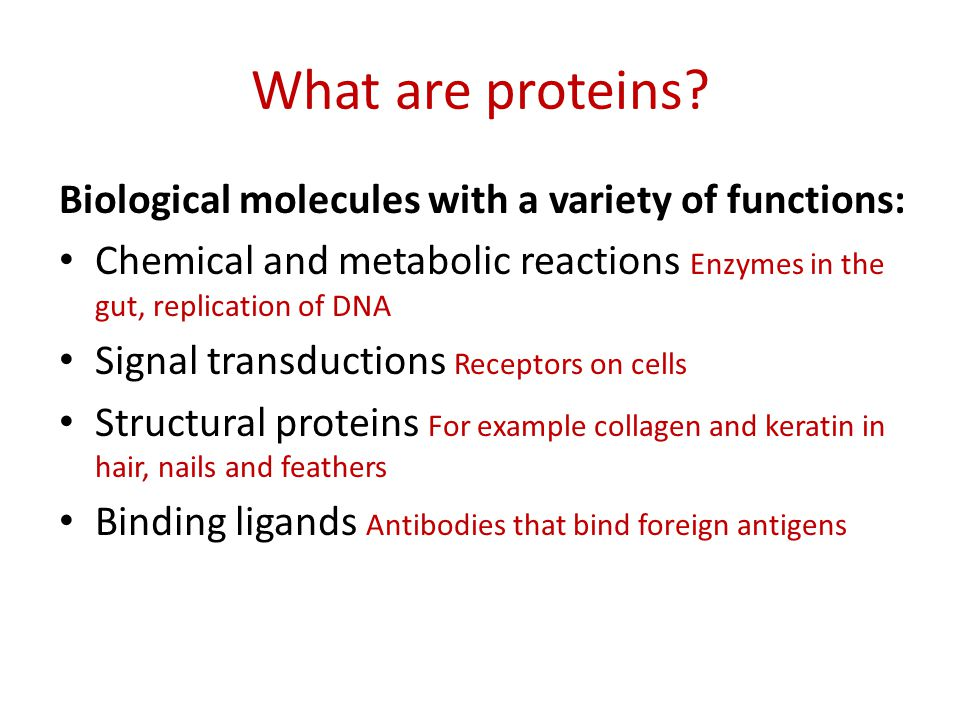What are proteins? Biological molecules with a variety of functions: Chemical and metabolic reactions Enzymes in the gut, replication of DNA Signal tr