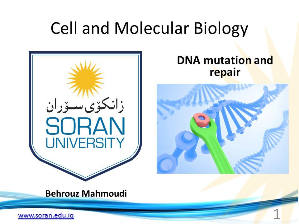 www.soran.edu.iq Type of Mutations (II) Change in protein 1.
