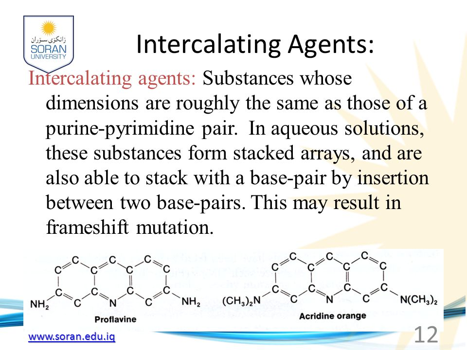 www.soran.edu.iq Intercalating Agents: Intercalating agents: Substances whose dimensions are roughly the same as those of a purine-pyrimidine pair. In