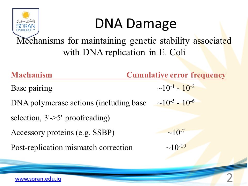 www.soran.edu.iq (a) Mismatches: Occurs during DNA synthesis (i.e.