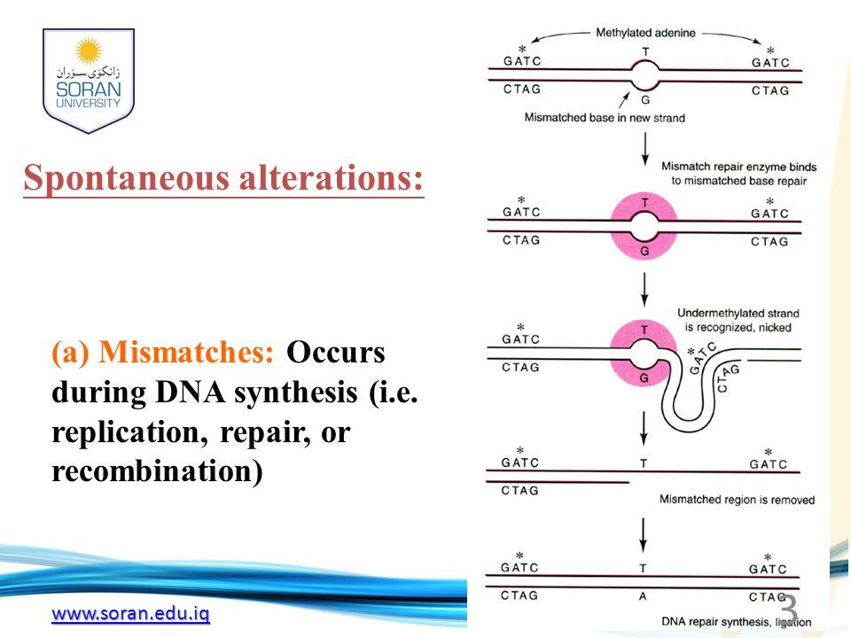 www.soran.edu.iq (b) Tautomeric shifts Nucleotides spontaneously under go a transient rearrangement of bonding, e.g.