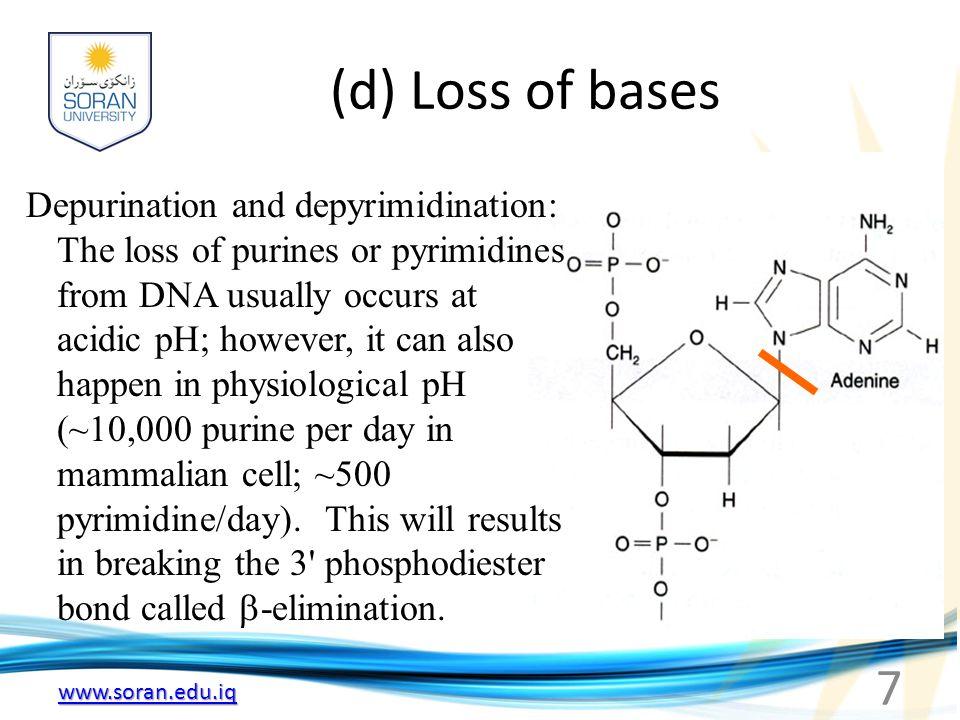 www.soran.edu.iq Induced Mutations (a) Physical agents that damage DNA: --- Ionizing radiation: OH, O 2 -, H 2 O 2, damage base and sugar residues.