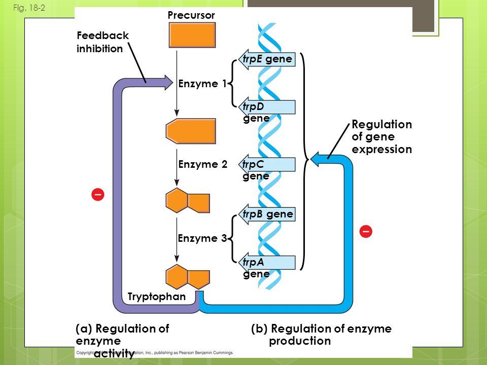 Fig. 18-2 Regulation of gene expression trpE gene trpD gene trpC gene trpB gene trpA gene (b) Regulation of enzyme production (a) Regulation of enzyme