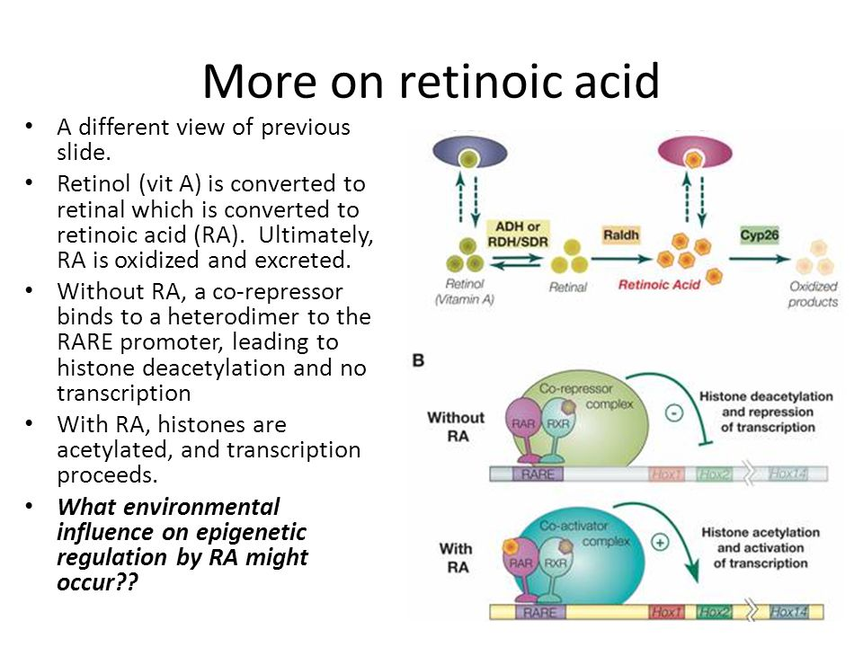 More on retinoic acid A different view of previous slide.