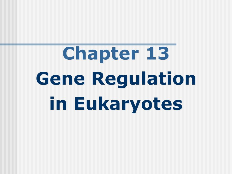 Chapter 13 Gene Regulation in Eukaryotes Chapter 13 Gene Regulation in Eukaryotes