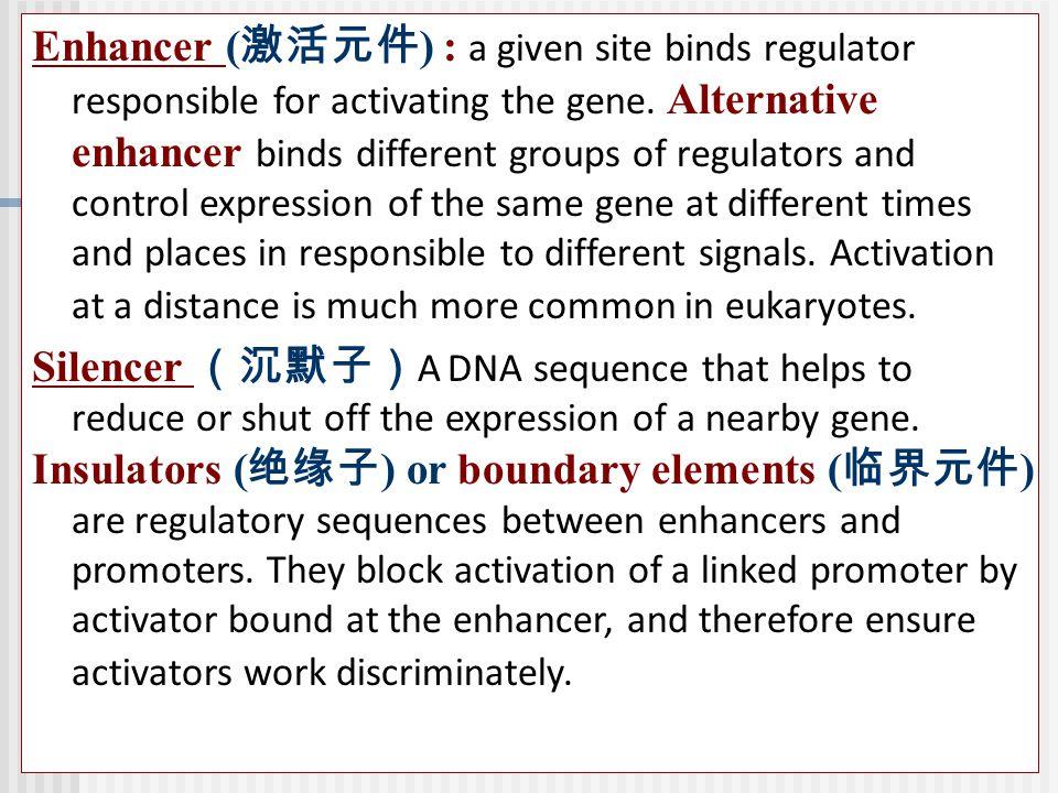Enhancer ( 激活元件 ) : a given site binds regulator responsible for activating the gene.