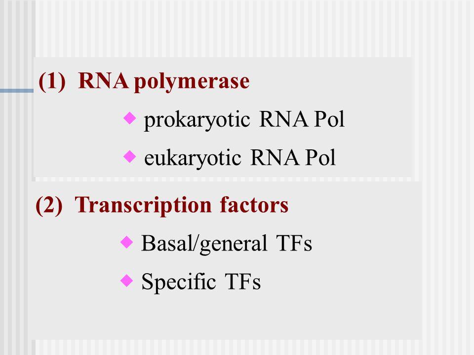 (1) RNA polymerase  prokaryotic RNA Pol  eukaryotic RNA Pol (2) Transcription factors  Basal/general TFs  Specific TFs