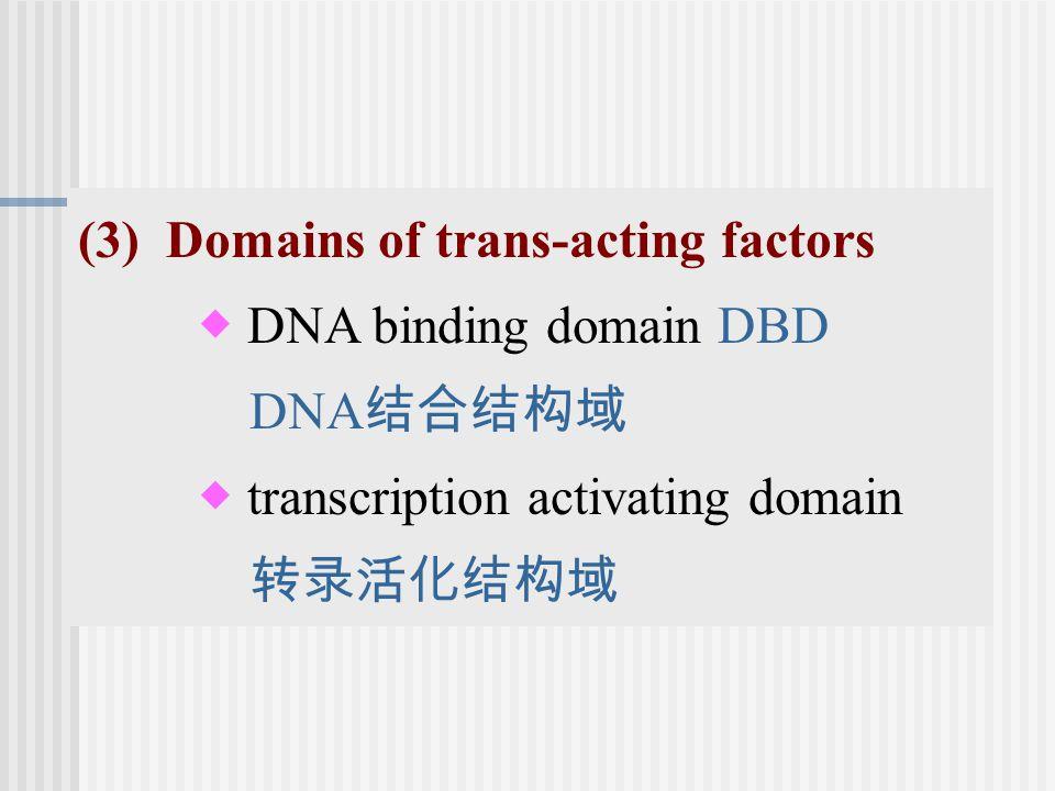 (3) Domains of trans-acting factors  DNA binding domain DBD DNA 结合结构域  transcription activating domain 转录活化结构域