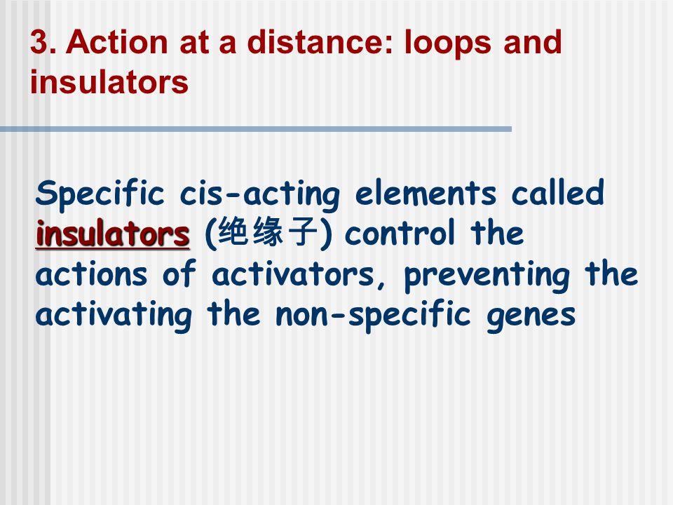 insulators Specific cis-acting elements called insulators ( 绝缘子 ) control the actions of activators, preventing the activating the non-specific genes 3.