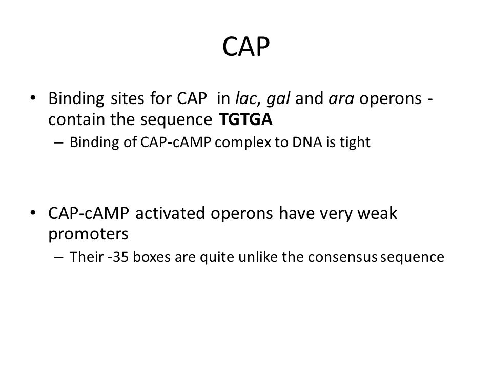 CAP Binding sites for CAP in lac, gal and ara operons - contain the sequence TGTGA – Binding of CAP-cAMP complex to DNA is tight CAP-cAMP activated op