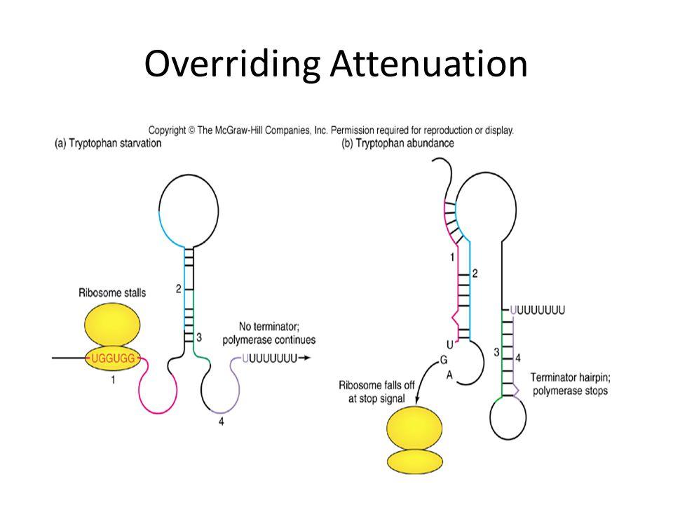Overriding Attenuation