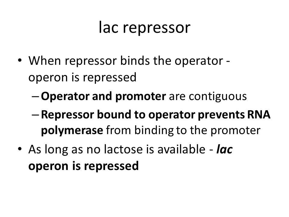 lac repressor When repressor binds the operator - operon is repressed – Operator and promoter are contiguous – Repressor bound to operator prevents RN
