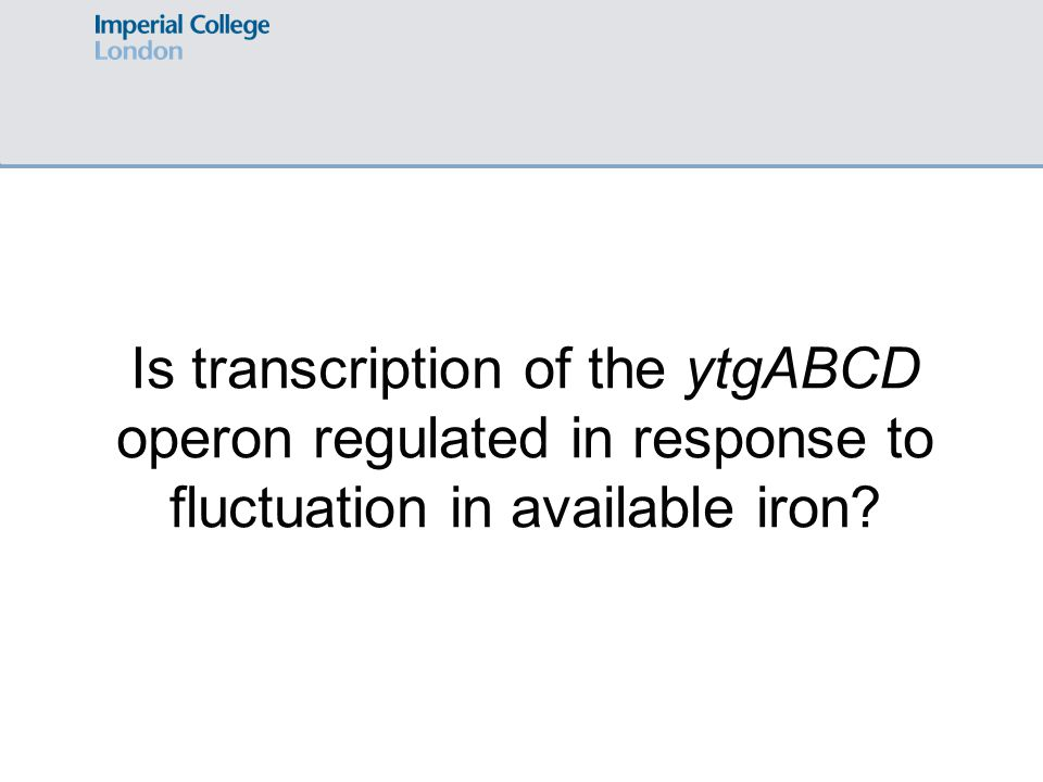 Is transcription of the ytgABCD operon regulated in response to fluctuation in available iron?
