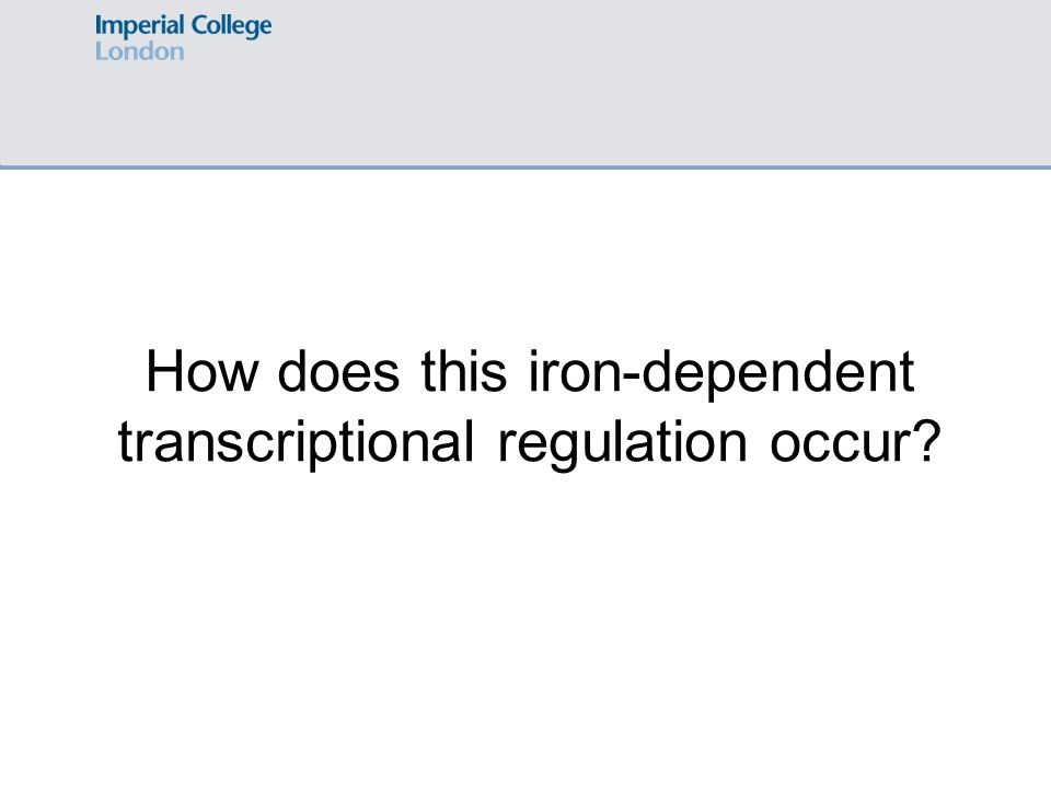 How does this iron-dependent transcriptional regulation occur?