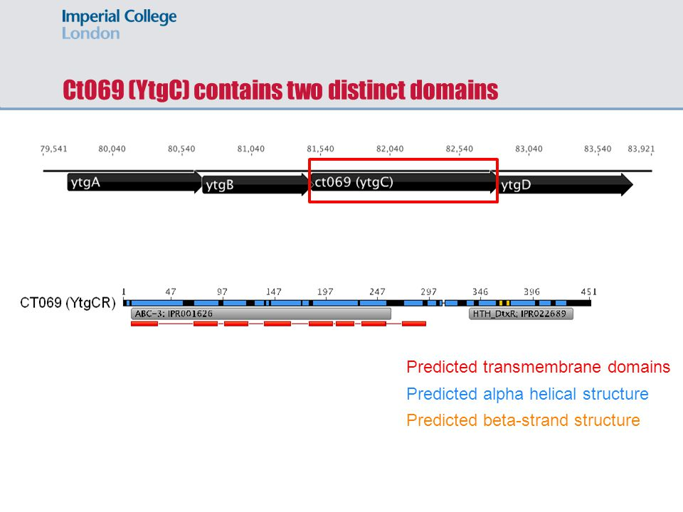 Ct069 (YtgC) contains two distinct domains Predicted transmembrane domains Predicted alpha helical structure Predicted beta-strand structure