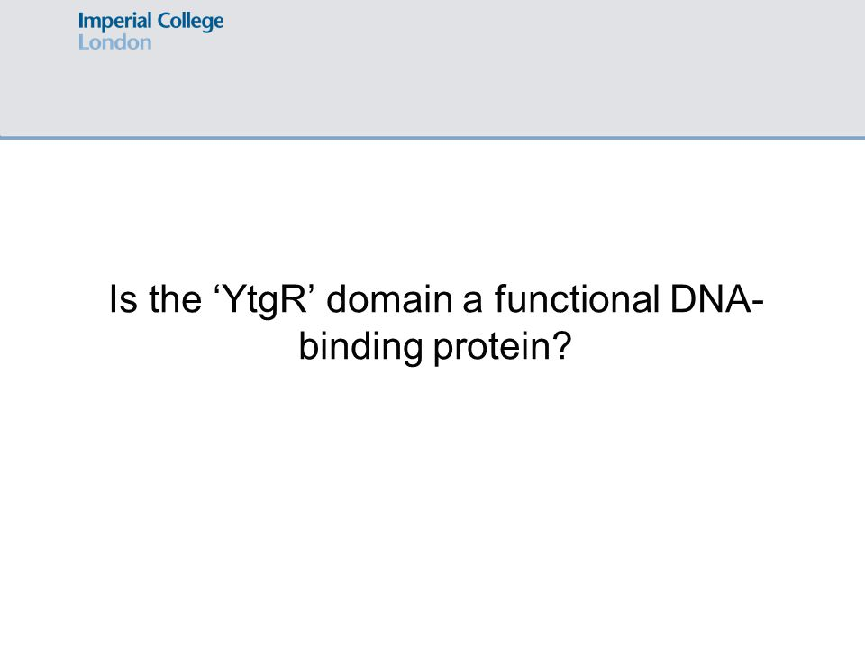Is the 'YtgR' domain a functional DNA- binding protein?