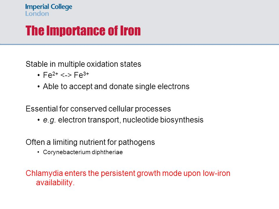 A model for maintenance of iron- homeostasis in Chlamydia