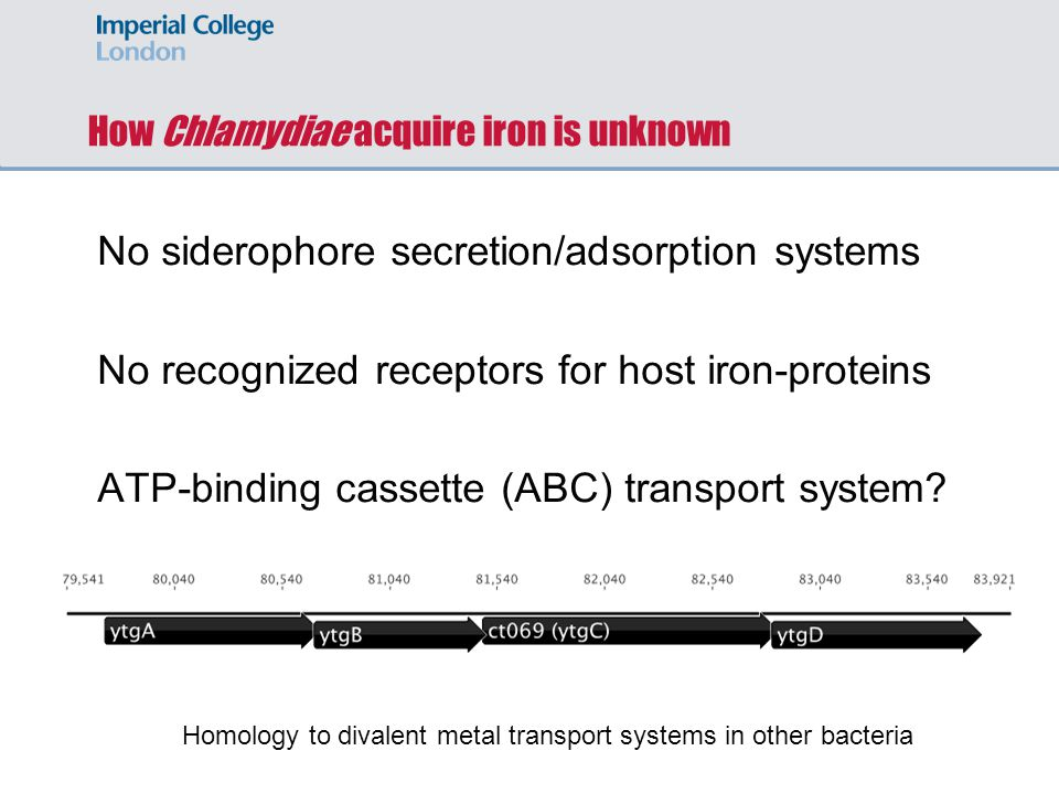 How Chlamydiae acquire iron is unknown No siderophore secretion/adsorption systems No recognized receptors for host iron-proteins ATP-binding cassette