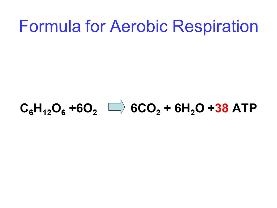Formula for Aerobic Respiration C 6 H 12 O 6 +6O 2 6CO 2 + 6H 2 O +38 ATP