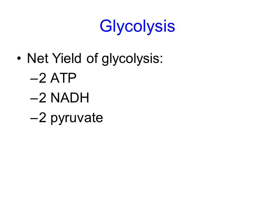 Glycolysis Net Yield of glycolysis: –2 ATP –2 NADH –2 pyruvate