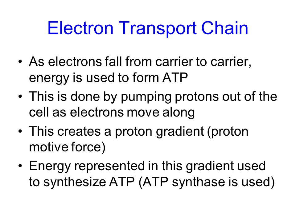 As electrons fall from carrier to carrier, energy is used to form ATP This is done by pumping protons out of the cell as electrons move along This cre