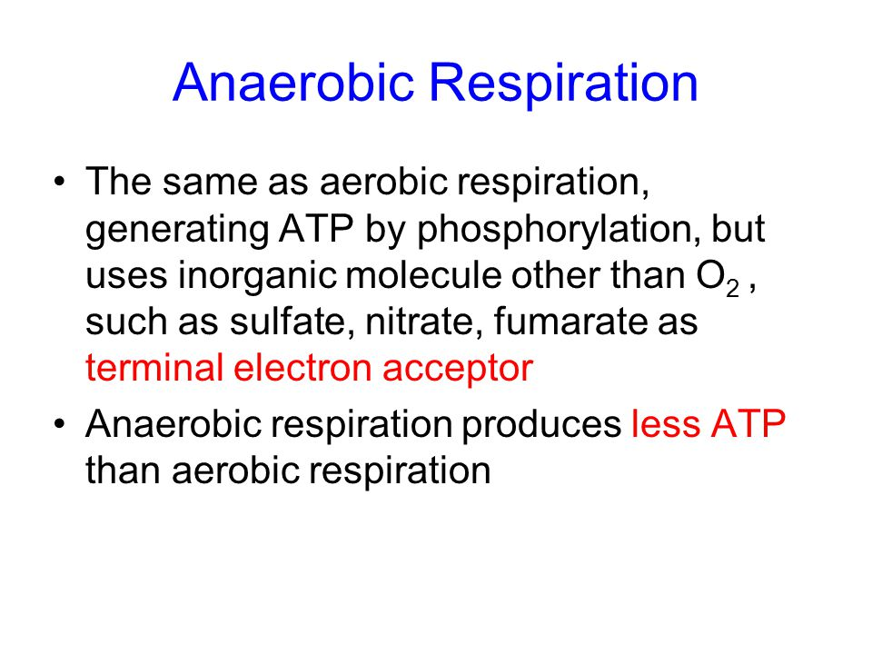 Anaerobic Respiration The same as aerobic respiration, generating ATP by phosphorylation, but uses inorganic molecule other than O 2, such as sulfate,