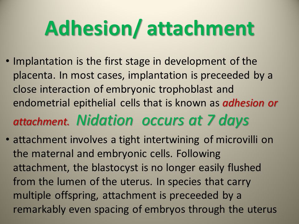 Adhesion/ attachment adhesion or attachment. Nidation occurs at 7 days Implantation is the first stage in development of the placenta. In most cases,