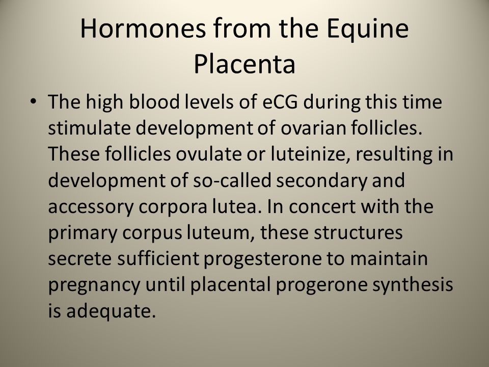 Hormones from the Equine Placenta The high blood levels of eCG during this time stimulate development of ovarian follicles. These follicles ovulate or