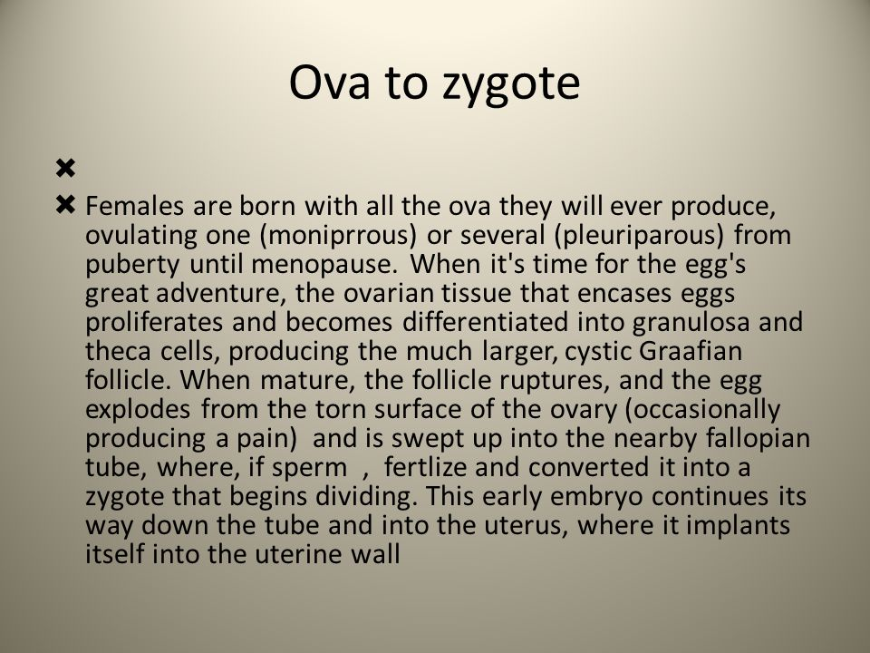 Ova to zygote   Females are born with all the ova they will ever produce, ovulating one (moniprrous) or several (pleuriparous) from puberty until me