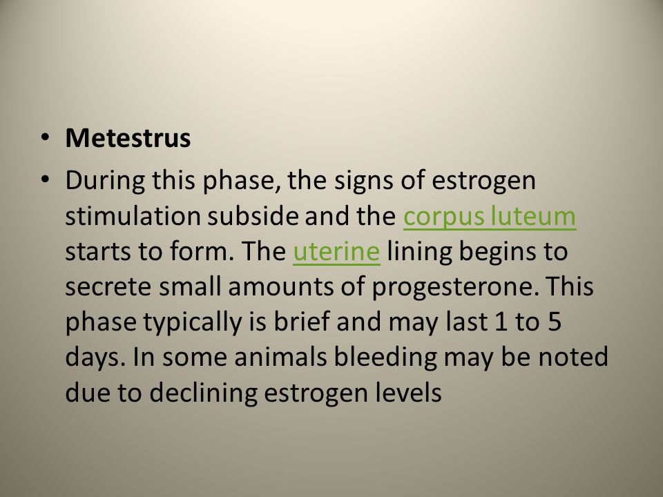 Metestrus During this phase, the signs of estrogen stimulation subside and the corpus luteum starts to form. The uterine lining begins to secrete smal