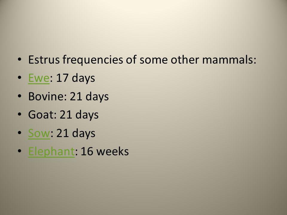 Estrus frequencies of some other mammals: Ewe: 17 days Ewe Bovine: 21 days Goat: 21 days Sow: 21 days Sow Elephant: 16 weeks Elephant