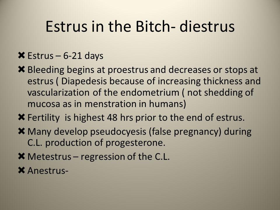 Estrus in the Bitch- diestrus  Estrus – 6-21 days  Bleeding begins at proestrus and decreases or stops at estrus ( Diapedesis because of increasing thickness and vascularization of the endometrium ( not shedding of mucosa as in menstration in humans)  Fertility is highest 48 hrs prior to the end of estrus.