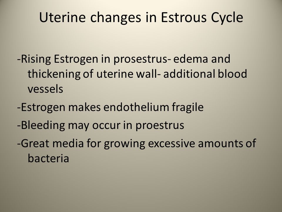 Uterine changes in Estrous Cycle -Rising Estrogen in prosestrus- edema and thickening of uterine wall- additional blood vessels -Estrogen makes endoth